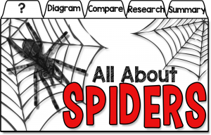 bats and spiders classroom activities
