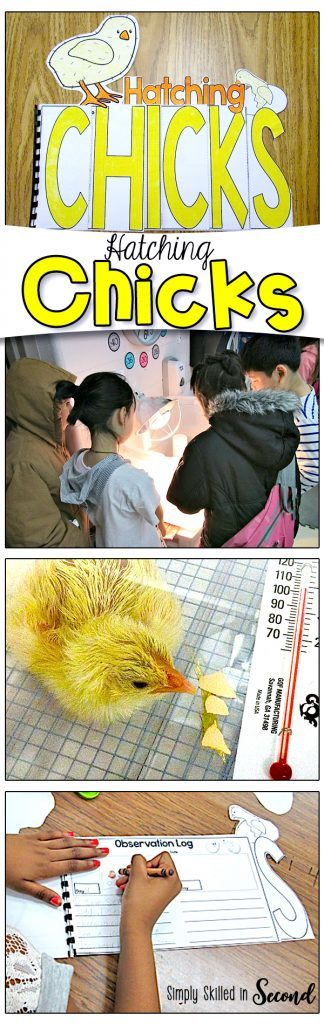 Hatching Chicks Activity overview